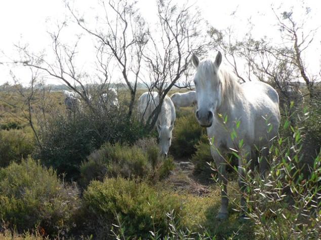 FH2011 126Pferde