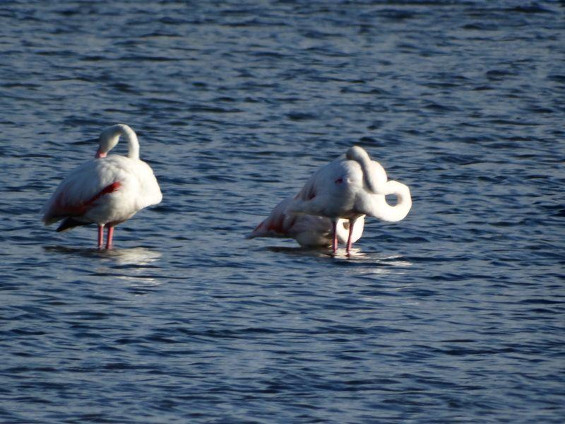 Die Flamingos sind auch da.
